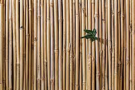 Living amenajat cu tapet din bambus